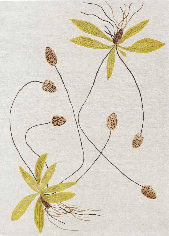 Ribwort Plantain